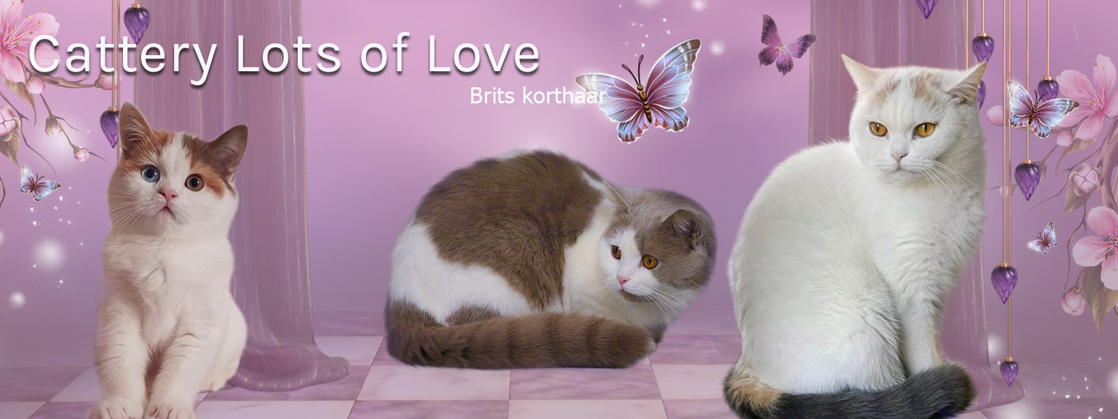 Cattery Lots of Love
